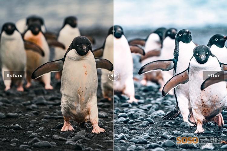 冬季旅拍LR预设 南极冰川雪地风光景点Lightroom预设/APP滤镜  Antarctica Presets
